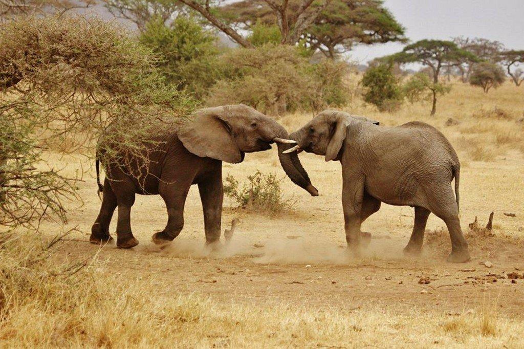 elephant-babies-278525_1280