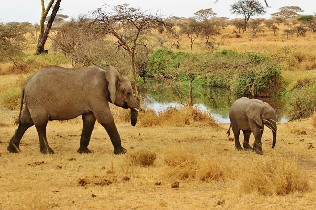 safari-287316_1280