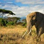 Safari w Tanzanii… przegląd agencji
