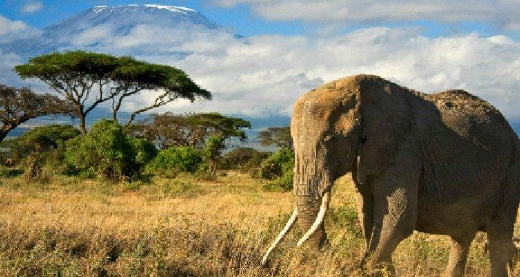 safari_tanzania