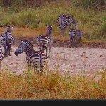 Cel z kamerą wśród zwierząt