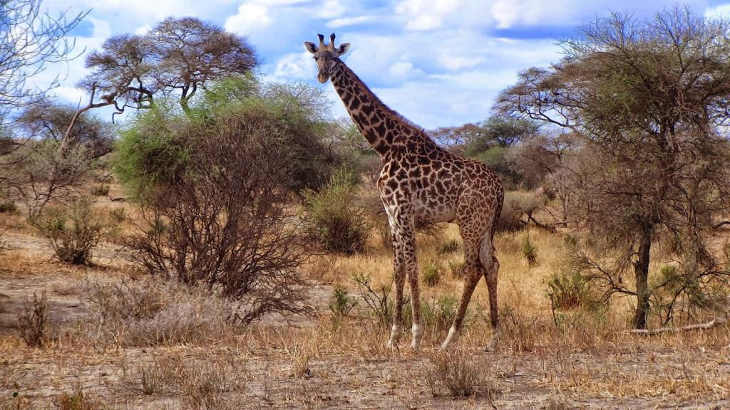 Tanzania Parki Narodowe