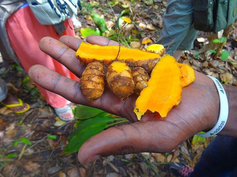 wycieczka na plantację przypraw na Zanzibarze
