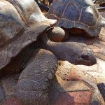 Prison Island i kilkusetletnie żółwie