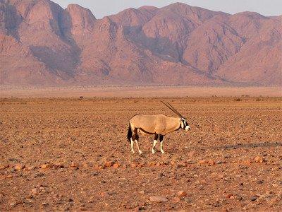 namibia dlaczego warto tam pojechać