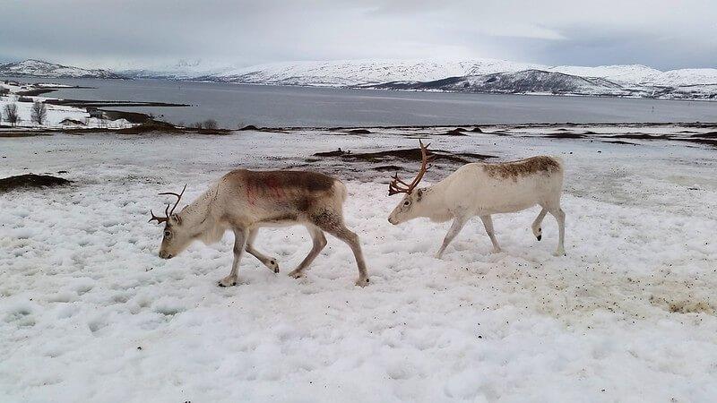 co robić w Tromso i okolicach