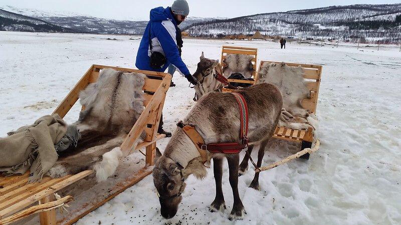 z wizytą u Saamów w Tromso