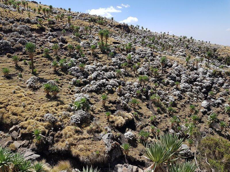ile dni na trekking w Etiopii