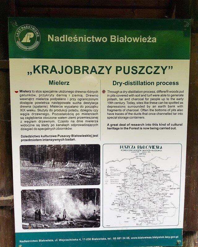 szlaki rowerowe w Białowieży