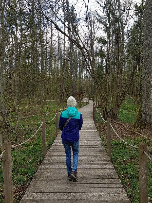 szlaki piesze w Puszczy Białowieskiej
