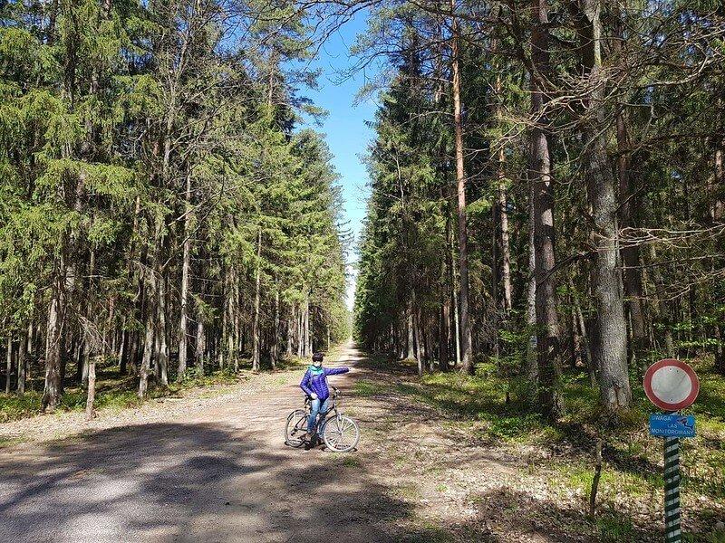 szlaki rowerowe w Puszczy Białowieskiej